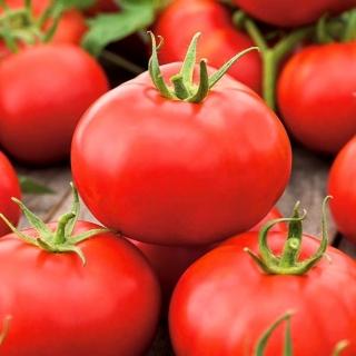 Pomidor Alka - gruntowy