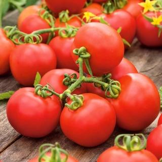 Pomidor Promyk - gruntowy