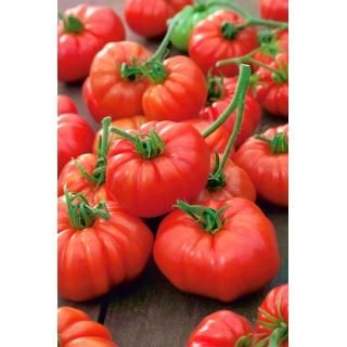 Pomidor Marmande - słodki i mięsisty