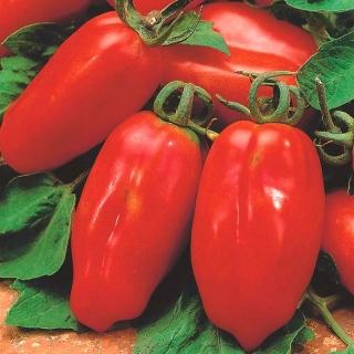 BIO Pomidor szklarniowy - Marzano 2 - Certyfikowane nasiona ekologiczne