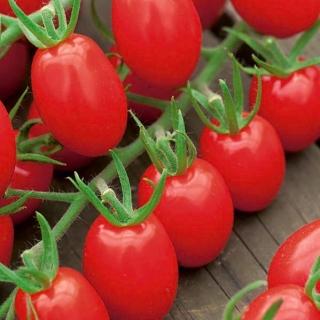Pomidor Tutti Fruti F1 - koktajlowy, gruntowy i pod osłony, wysoki