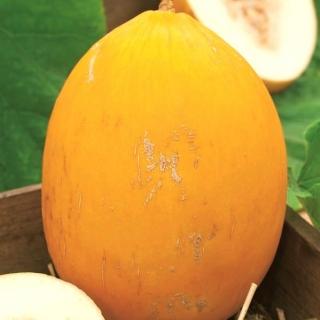 Melon Jaune Canari 2