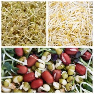 Nasiona na kiełki - Zestaw Wzmacniający organizm