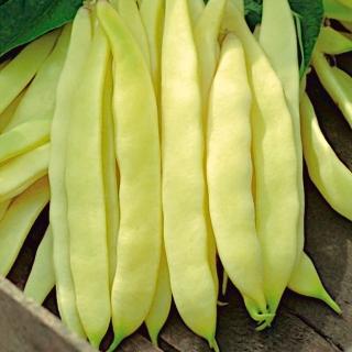 Fasola Bis - karłowa szparagowa żółtostrąkowa