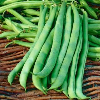 Fasola Malwina - szparagowa zielona