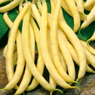 Fasola Polka - zwykła żółtostrąkowa