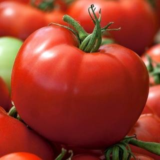 Pomidor Hardy - szklarniowy i pod osłony, trwałe, duże owoce