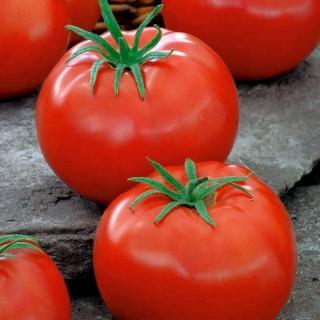 Pomidor Pedro - szklarniowy i pod osłony, dobry do przechowywania