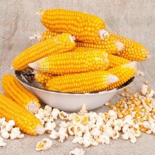Kukurydza pękająca Dobosz - popcorn