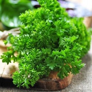 Pietruszka naciowa Moss Curled