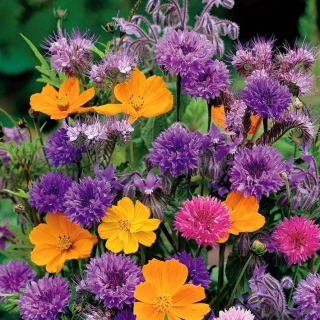 Mieszanka roślin o pachnących kwiatach - duża paczka - 125 g