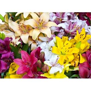 Lilia - mix odmian i kolorów