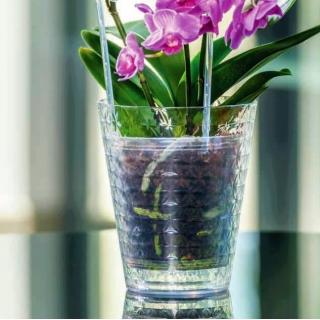 Osłonka do storczyków Diament Petit - 13 cm - transparentna