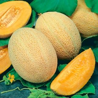 Melon Junior - miąższ pomarańczowy, gruby i aromatyczny