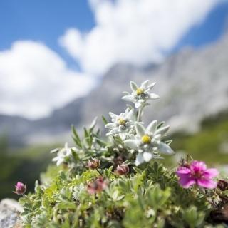 Mieszanka kwiatów - Kwiaty Tatr Polskich