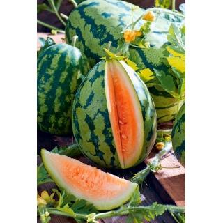 Arbuz, kawon Orangeglo - pomarańczowy
