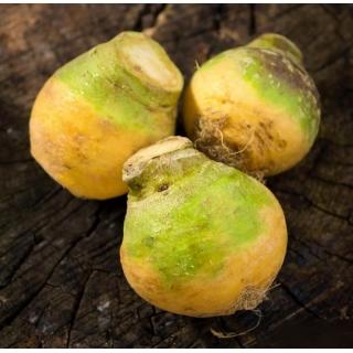 Brukiew pastewna Saba - 10 g