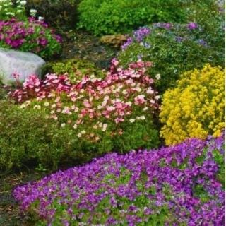 Mieszanka cmentarna - rośliny jednoroczne i wieloletnie