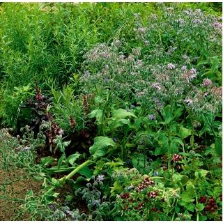 Mieszanka ziół - Miododajne zioła jednoroczne