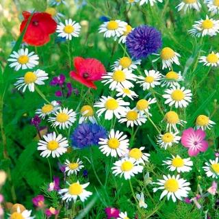 Łąka kwiatowa Antysmogowa - mieszanka kwiatów redukujących smog - 250 gram