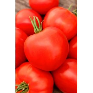 Pomidor Palava F1 - 250 nasion - nasiona profesjonalne dla każdego