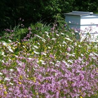 Rośliny miododajne - mieszanka bylin na tereny wilgotne - 1000 g
