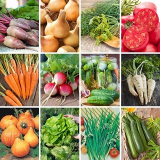 Zestaw XXL - 12 odmian nasion warzyw, kolekcja sprawdzonych odmian