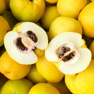 Owoce pigwowca - doskonałe na nalewki i soki - 15 kg