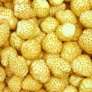 Poziomka Yellow Wonder - żółta