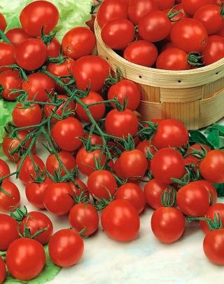 Pomidor Pokusa - wysoki czereśniowy