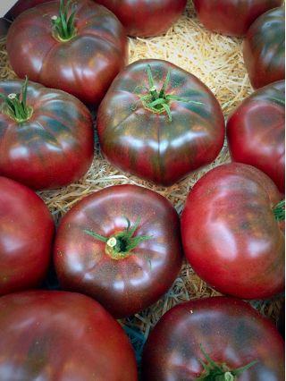 Pomidor Noire de Crimee - gruntowy wysoki