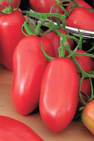 Pomidor Malinowy Bosman - gruntowy, karłowy, średniowczesny, doskonały na przetwory